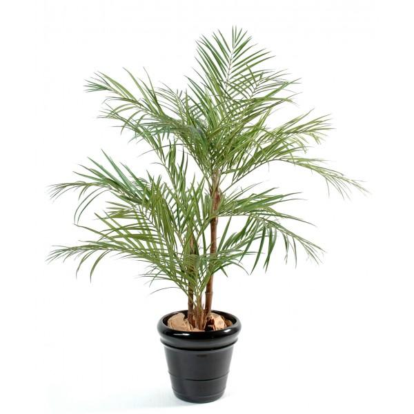 Plante verte pas chere fleurs plantes artificielles for Fleur pas chere a planter