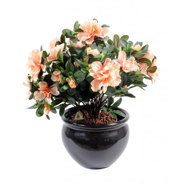 plante ligne pas cher