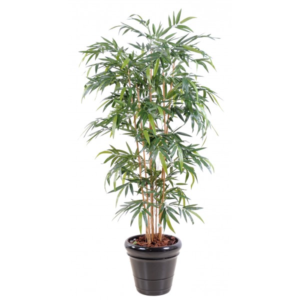 Faux bambou prix achat vente en ligne for Faux bambou