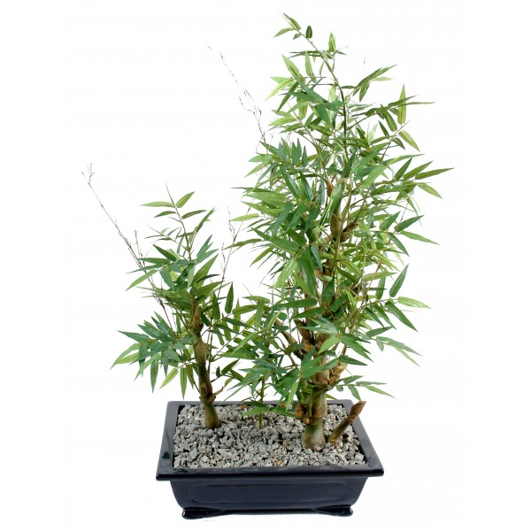 Bonsai Bambou En Coupe – Arbre artificiel