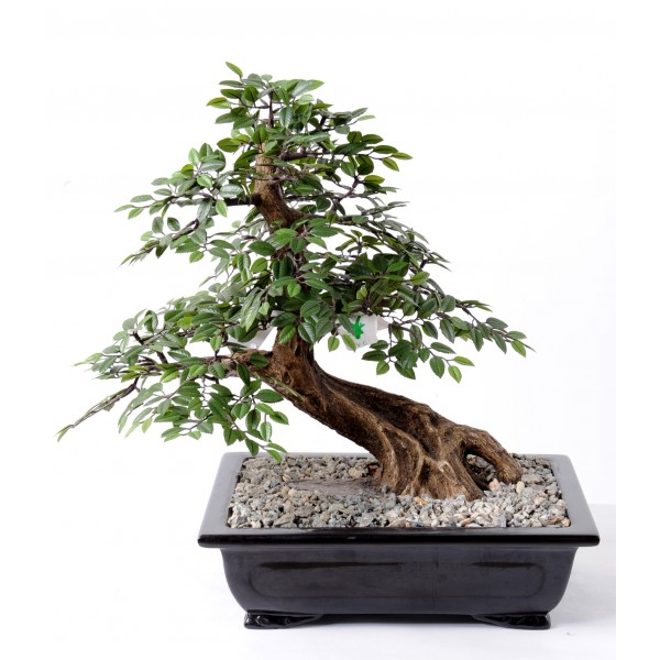 Bonsai Chinese Elm En Coupe – Arbre artificiel