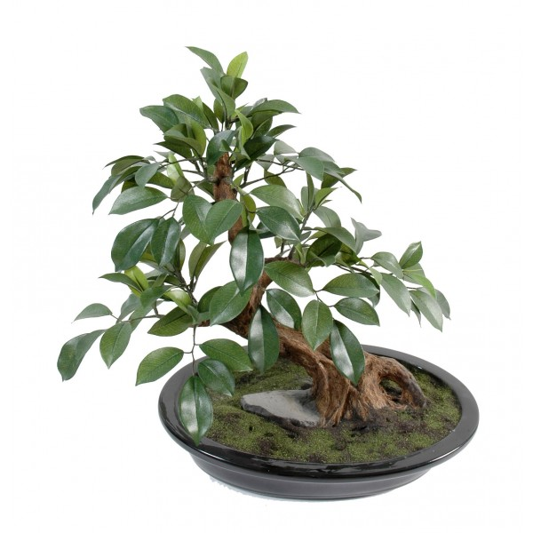 Bonsai Ficus En Coupe – Arbre artificiel