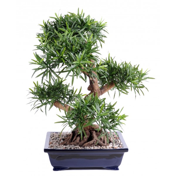 Bonsai Podocarpus En Coupe Gravier – Végétal artificiel