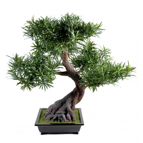 Bonsai Podocarpus En Coupe Bonsai artificiel