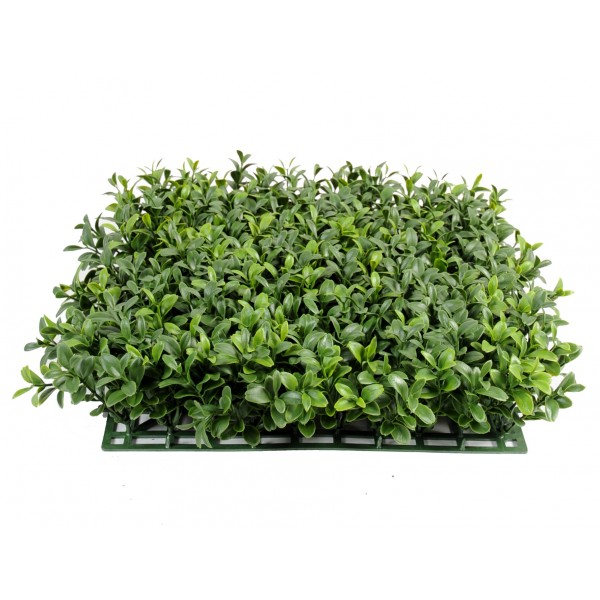 Buis Plaque New *300 – Plante artificielle