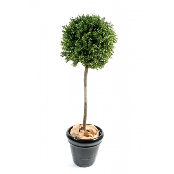 achat plante en ligne pas cher papyrus plante achat
