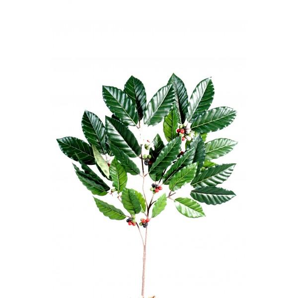 Plante verte d 39 int rieur pas cher fleurs plantes for Plante verte pas cher en ligne
