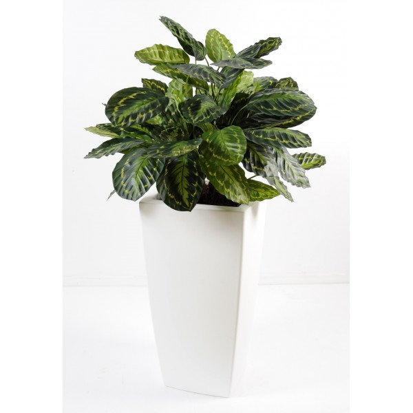 Calathea en pot pure haut composition artificielle for Plante haute en pot
