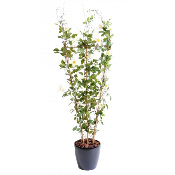 lierre palissade 100 200 pas cher fleurs plantes. Black Bedroom Furniture Sets. Home Design Ideas