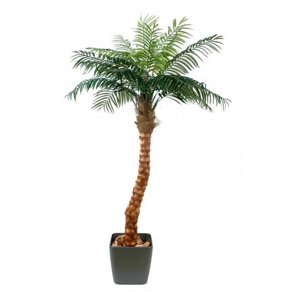 Coconut Tree Bended – Arbre artificiel