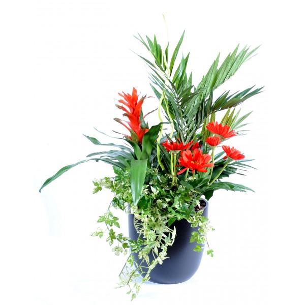 les plus belles plantes d 39 int rieur fleurs plantes. Black Bedroom Furniture Sets. Home Design Ideas