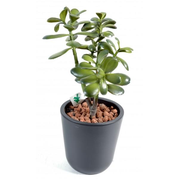 crassula jade plant plante artificielle fleurs plantes artificielles. Black Bedroom Furniture Sets. Home Design Ideas