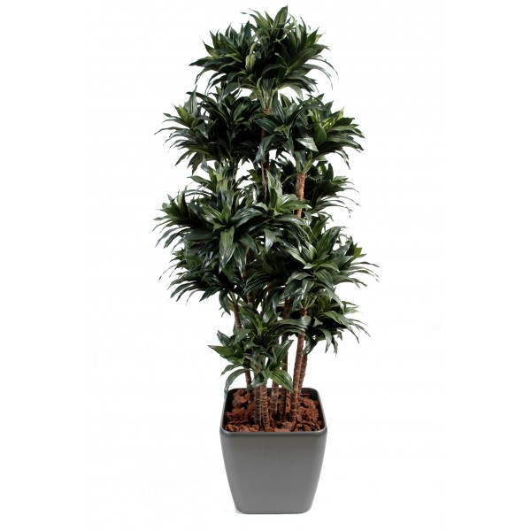 Plante interieur retombante fleurs plantes artificielles for Plante interieur retombante