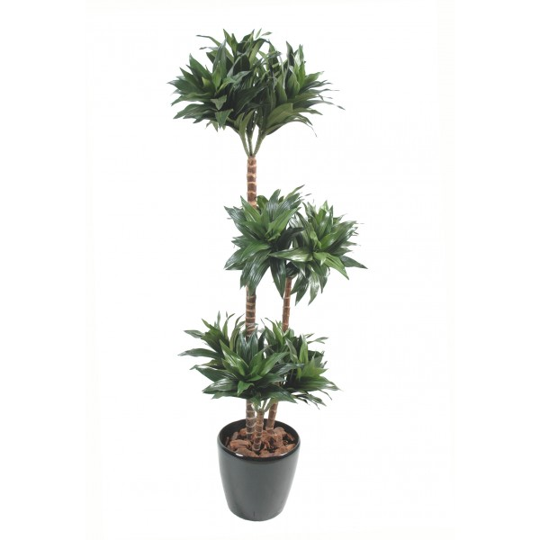 Dracena fragrans arbre artificiel fleurs plantes for Arbre artificiel