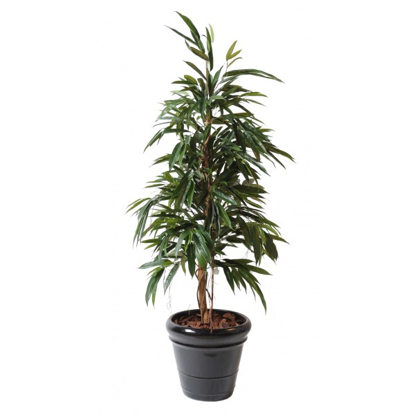 Ficus Alii Bush Royal – Arbre artificiel
