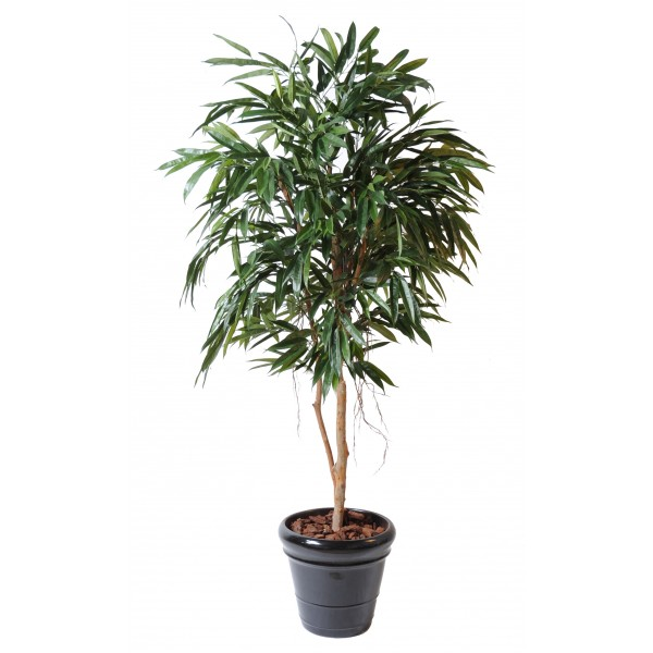 Ficus Alii Royal – Arbre artificiel