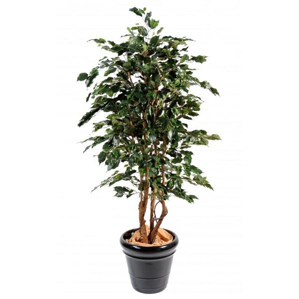 Ficus pas cher for Mini plante pas cher