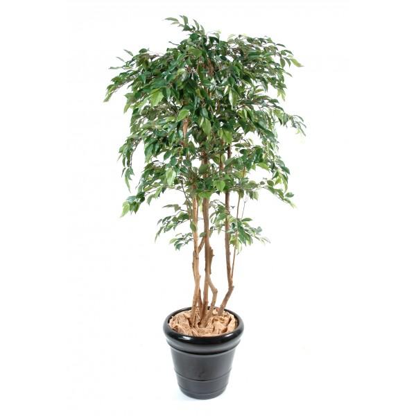 Ficus multitree natasja arbre artificiel fleurs for Arbre factice