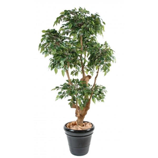 ficus natasja 5 tetes arbre artificiel fleurs plantes artificielles. Black Bedroom Furniture Sets. Home Design Ideas