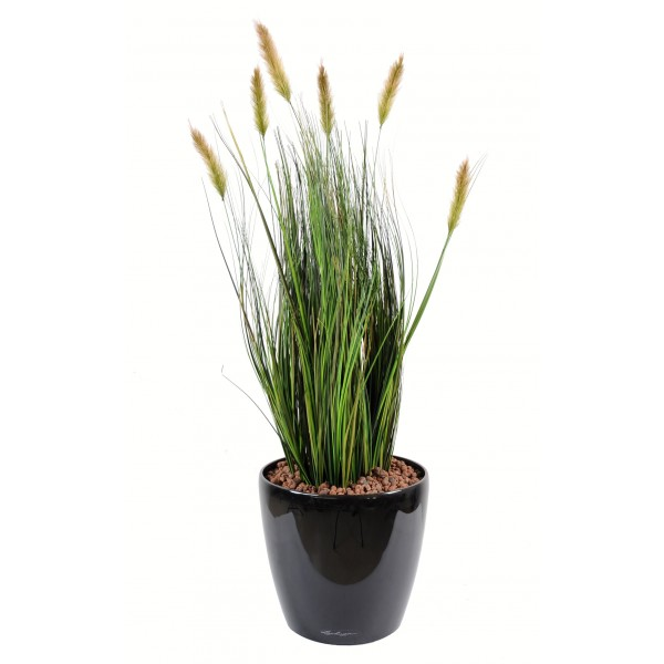 Achat plante interieur for Plante interieur photo