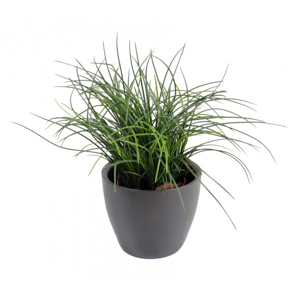 Plante haute en pot gramines en pot association de for Pot pour bambou exterieur