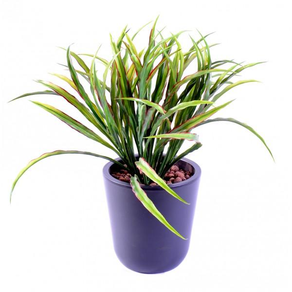 Plante verte retombante interieur fleurs plantes for Plante interieur retombante
