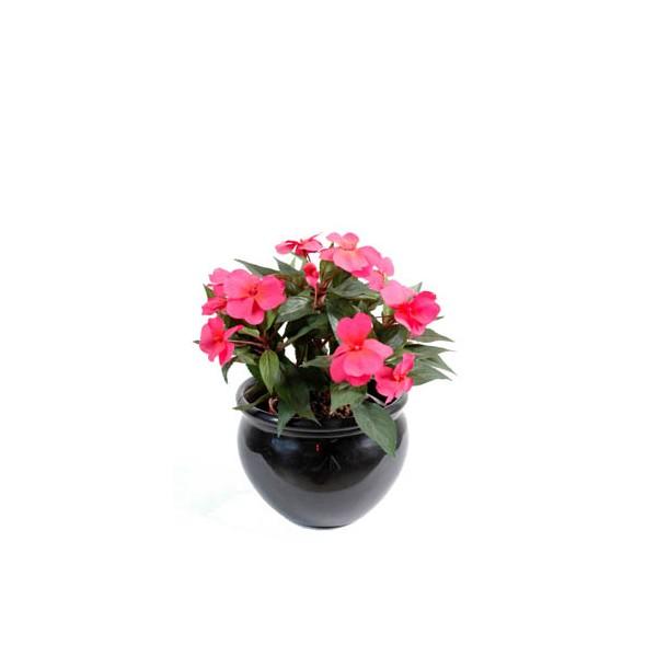 Mini plante artificielle prix achat vente en ligne for Achat plante en ligne