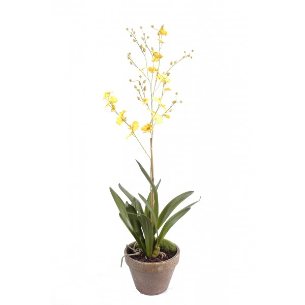 Orchidee Dancing Lady Pot Terre – Composition artificielle