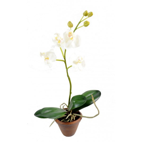 Phalaenopsis En Pot 4 Fleur – Composition artificielle