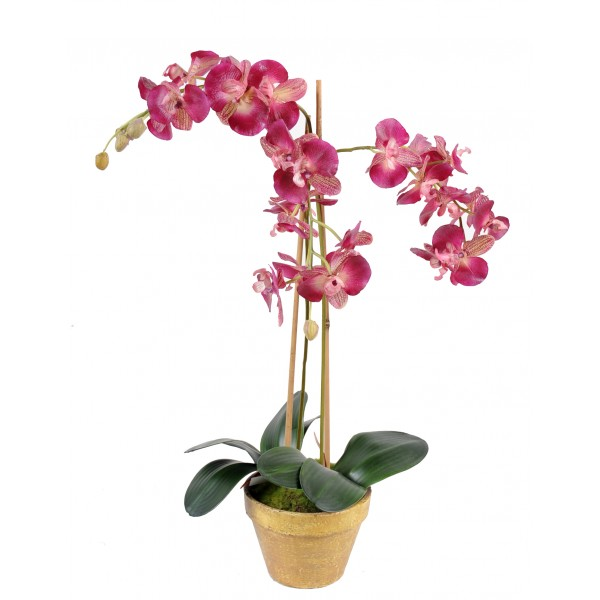Phalaenopsis L Pot Terre – Composition artificielle