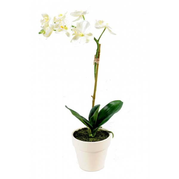 Phalaenopsis Mini Pot – Composition artificielle