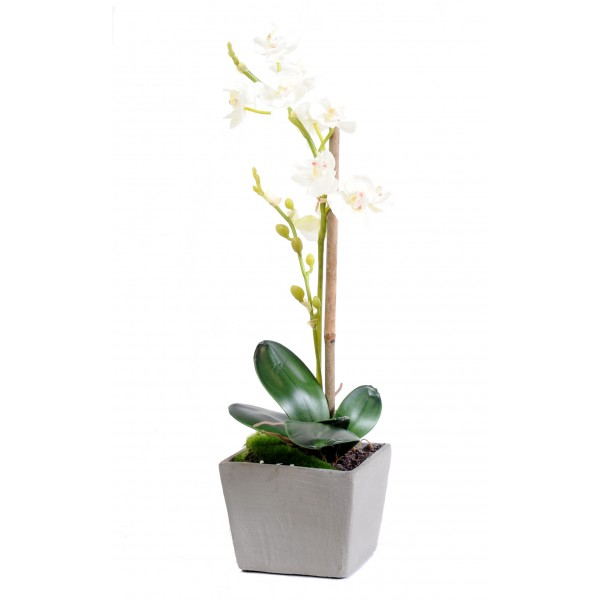 Phalaenopsis Pot – Végétal artificiel