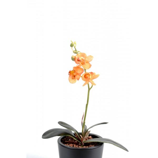 Plante verte tombante prix achat vente en ligne for Plante verte tombante