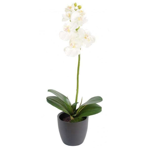 phalaneopsis m7 2 en pot indoor composition artificielle fleurs plantes artificielles. Black Bedroom Furniture Sets. Home Design Ideas