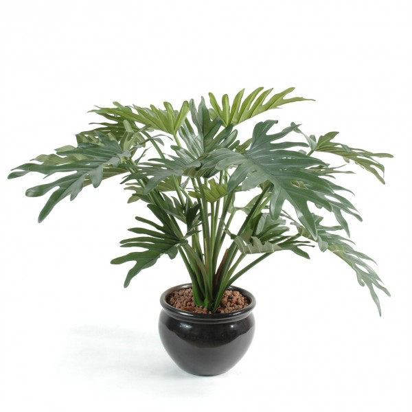 Philodendron Selloum Arbre – Arbre artificiel