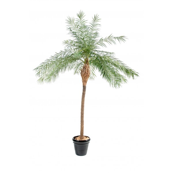 Phoenix New – Arbre artificiel
