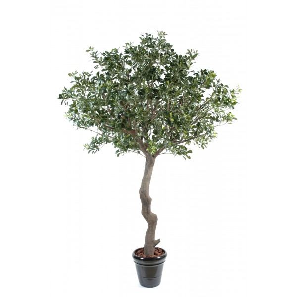 Pittosporum Arbre – Arbre artificiel