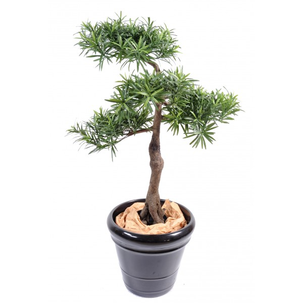 Podocarpus Bonsai*4 – Arbre artificiel