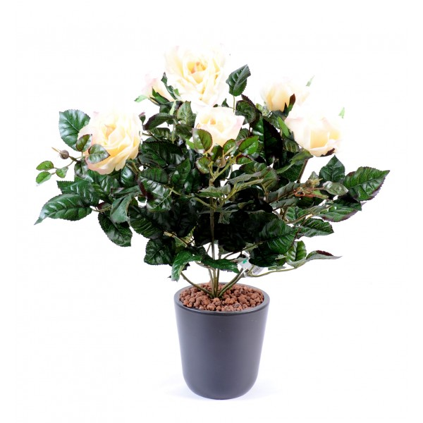 Rosier Francais Piquet*6 – Plante artificielle