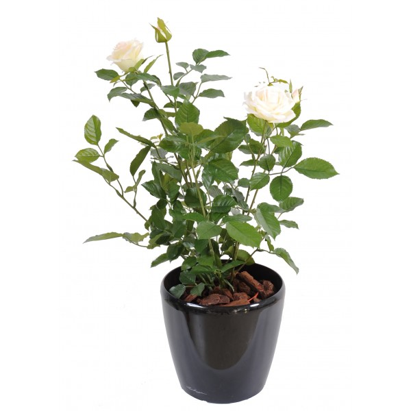 Rosier Royal 60 Cm – Plante artificielle
