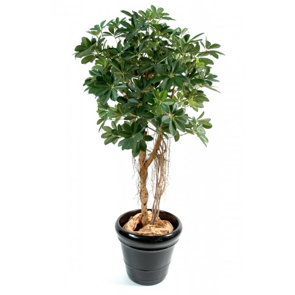 Schefflera Baby Tree – Arbre artificiel