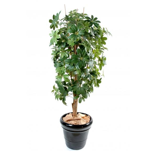 Schefflera arbre artificiel fleurs plantes artificielles for Arbre factice