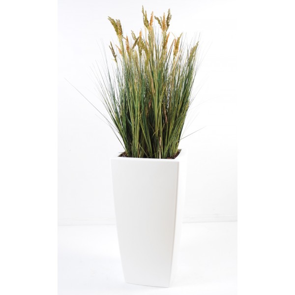 Scirpus Validus En Pot Pure Haut – Composition artificielle