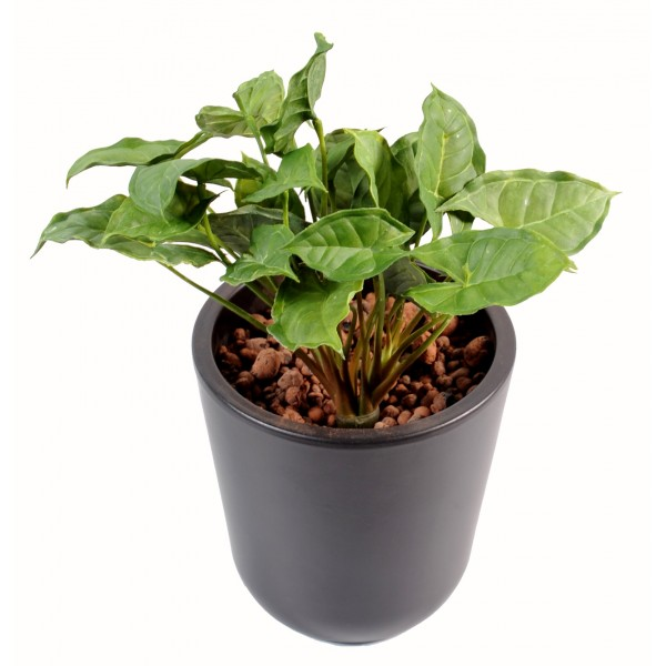 Syngonium chute 155 plante artificielle fleurs for Mini plante artificielle