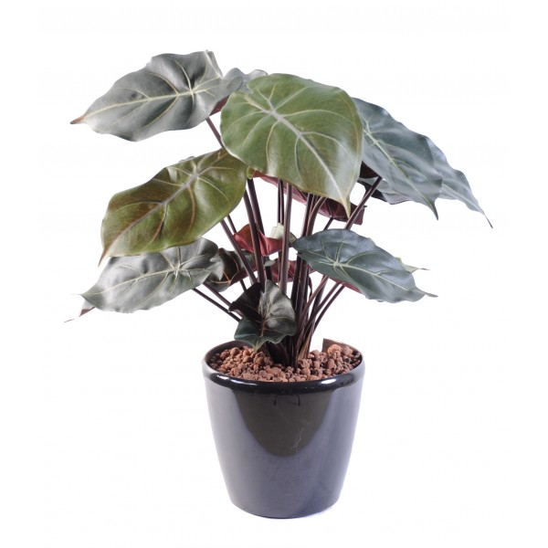 syngonium podophyllum plante artificielle fleurs plantes artificielles. Black Bedroom Furniture Sets. Home Design Ideas